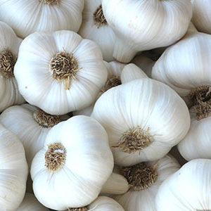 ail blanc AB de la Drôme
