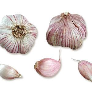 plants ail Primor AB