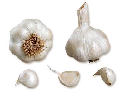 plants ail Sabadrome AB