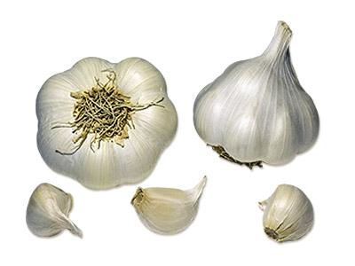 plants ail Sabagold AB