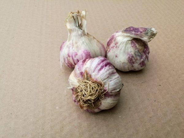 ail bio violet 40/50 brossé